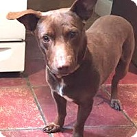 Adopt A Pet :: Toby - Sunnyvale, CA