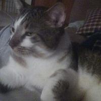 Adopt A Pet :: Julian - Naples, FL