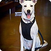 Adopt A Pet :: Pearl - Orange, CA