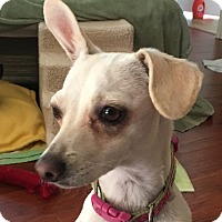 Adopt A Pet :: Bambi - San Marcos, CA