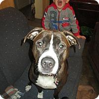 Adopt A Pet :: Rocky - ROME, NY