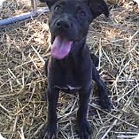 Adopt A Pet :: Sasha in CT - Manchester, CT