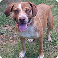 Adopt A Pet :: Luna - Bishopville, SC