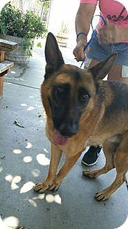 German Shepherd Dog Dog for adoption in San Diego, California - Pharoah