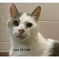 Adopt A Pet :: Noah - Richmond Hill, ON