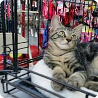 Adopt A Pet :: JACK - Ridgewood, NY