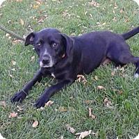 Adopt A Pet :: Jamie - Cokato, MN