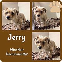 Adopt A Pet :: Jerry - Snyder, TX