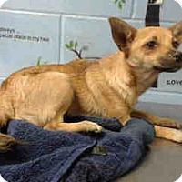 Adopt A Pet :: URGENT ON 10/26 San Bernardino - San Bernardino, CA