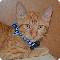 Adopt A Pet :: Theodore - Flower Mound, TX