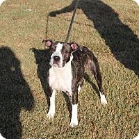 Adopt A Pet :: Cranberry - Washington, DC