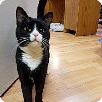 Adopt A Pet :: Tobinette - Cumberland, ME