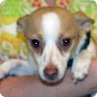 Adopt A Pet :: Zukey - Wildomar, CA