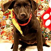 Adopt A Pet :: Jocelyn - Glastonbury, CT