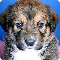 Adopt A Pet :: PETALS(OUR
