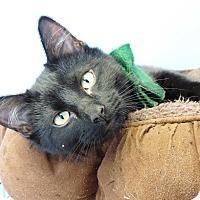 Adopt A Pet :: Burberry - Brookings, SD