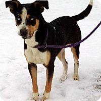 Adopt A Pet :: Leah - Aurora, IL