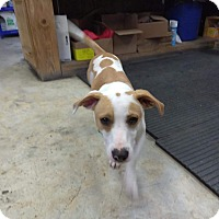 Adopt A Pet :: Joe - Glen St Mary, FL