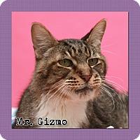 Adopt A Pet :: Mr. Gizmo - Aiken, SC
