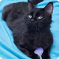 Adopt A Pet :: Darren - Chicago, IL