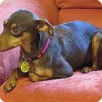 Adopt A Pet :: Melody - McDonough, GA