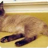 Adopt A Pet :: Nicholas - Davis, CA