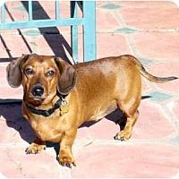 Adopt A Pet :: Cooper - San Jose, CA