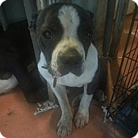 Adopt A Pet :: Dexter - New orleans, LA