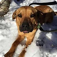 Adopt A Pet :: Sam - Charlestown, RI
