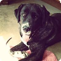 Adopt A Pet :: Anya (courtesy listing) - Richmond, VA