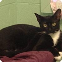 Adopt A Pet :: Twizzler - Carencro, LA