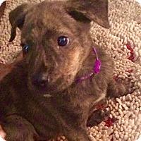 Adopt A Pet :: MISO - CHICAGO, IL