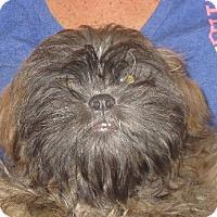 Adopt A Pet :: Franco - Westport, CT