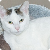 Adopt A Pet :: Whitney - Elmwood Park, NJ