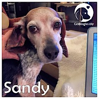 Adopt A Pet :: Sandy - Pittsburgh, PA