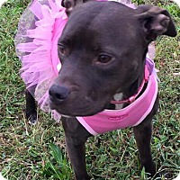 Adopt A Pet :: Eartha - nashville, TN