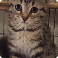 Adopt A Pet :: Inklin - Ortonville, MI