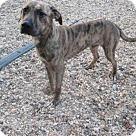 Adopt A Pet :: *ELLIOT