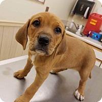Adopt A Pet :: Eleanor - Wilmington, DE