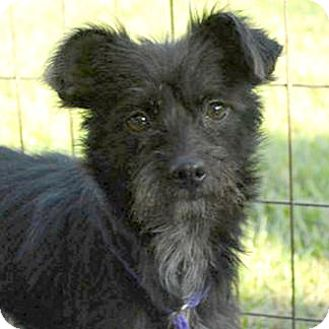 Terrier (Unknown Type, Medium) Mix Dog for adoption in Sunnyvale, California - Poppy
