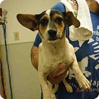 Adopt A Pet :: A570928 - Oroville, CA