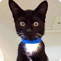 Adopt A Pet :: Aaren - Smithtown, NY