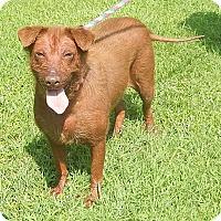 Adopt A Pet :: Sadie - Newport, NC