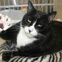 Adopt A Pet :: ZOE - Hampton Bays, NY