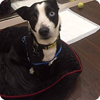 Adopt A Pet :: David - Valencia, CA