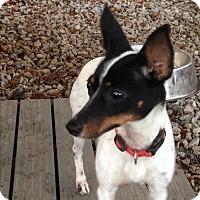 Adopt A Pet :: Abby - Pottstown, PA