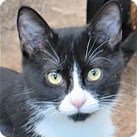 Adopt A Pet :: Tuxi - Gonzales, TX