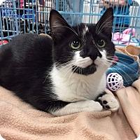 Adopt A Pet :: Marlie - Mansfield, TX