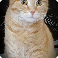 Adopt A Pet :: Sunkist - Dallas, TX
