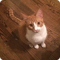 Adopt A Pet :: Jefferson - Houston, TX